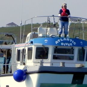 Newquay Sea Safaris - an experience you'll never forget.
