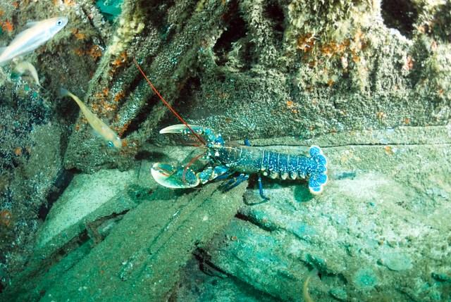 Diverse Marine Wildlife Off the Newquay Coast