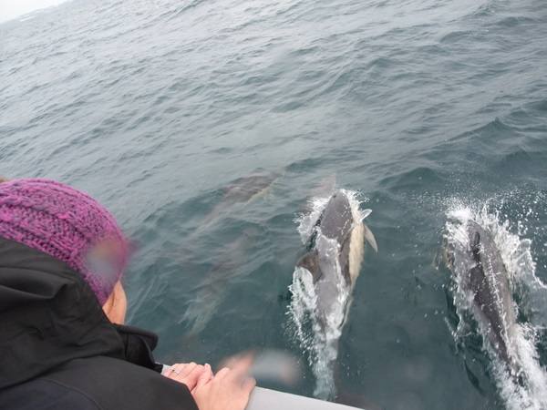 common dolphins with Kylie