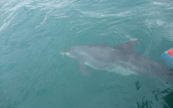 Beautiful Bottlenose Dolphin