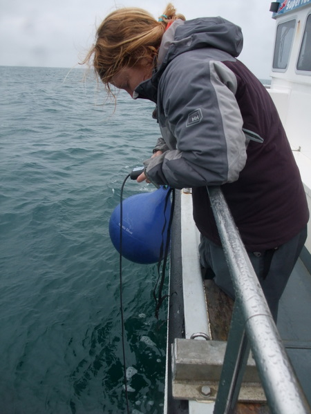 Bex monitoring with hydrophone for whale song