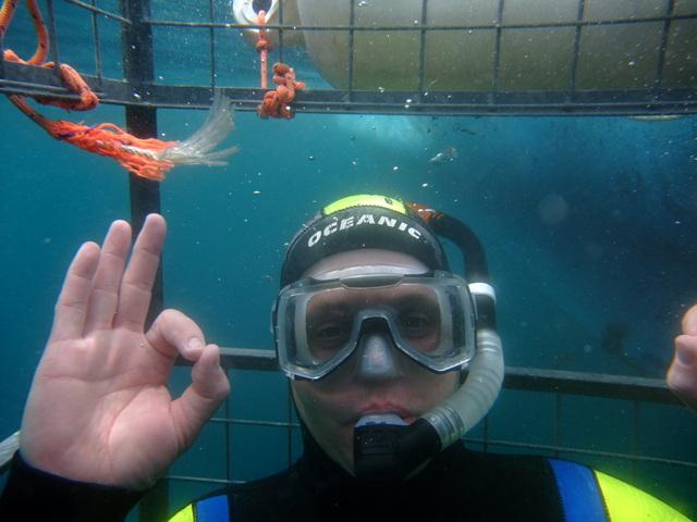 Shark Cage Diver off Atlantic Diver