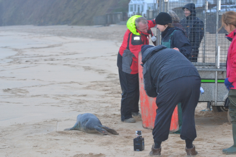 Chris and Others Help Encourage Seal Pup to the Sea