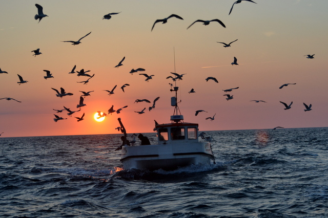 Atlantic Voayger out Mackerel fishing in Beautiful Sunset