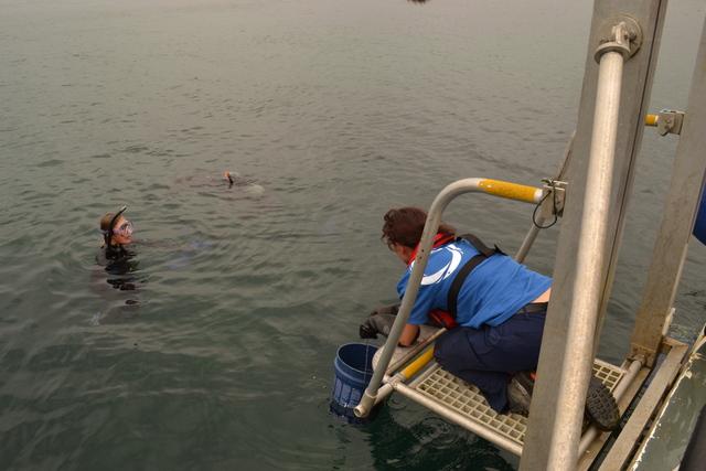 Heather....Plymouth Marine Aquarium...ensuring welfare of jellyfish