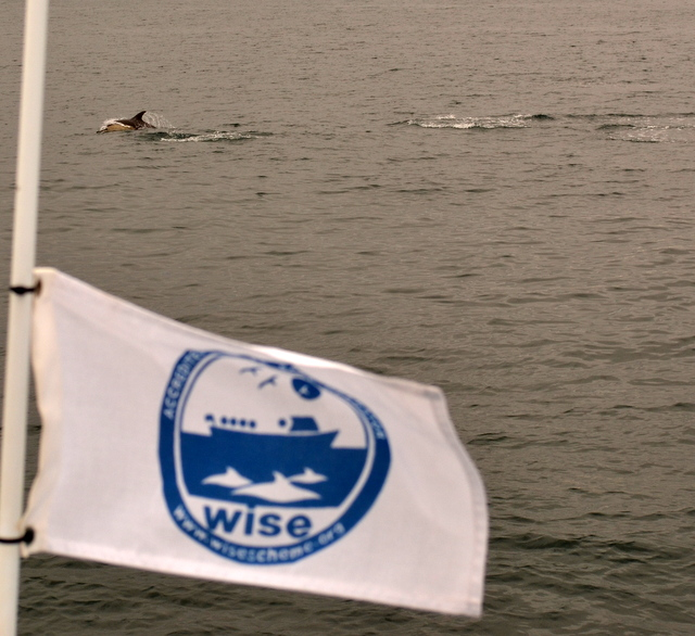 Master WiSe Accredited boat operators in Newquay