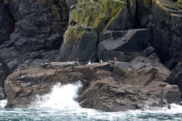 Sea Birds perched on spectacular North Cornwall Rock off Newquay
