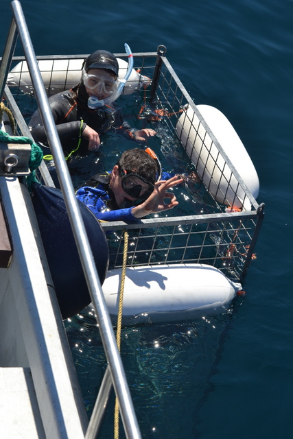 Blue Shark Cage Divers in Shark Cage on board Atlantic Diver