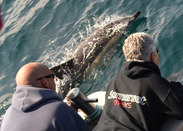Somerset Divers watch Dolphins and are Thrilled