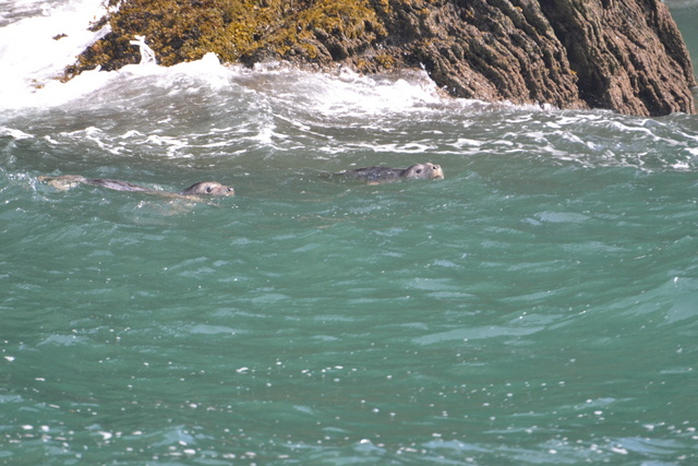 Who Said Seals don't play together