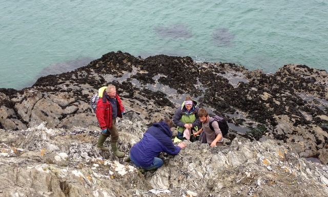 Team of Marine Mammal Medics relay sick seal pup up cliff face