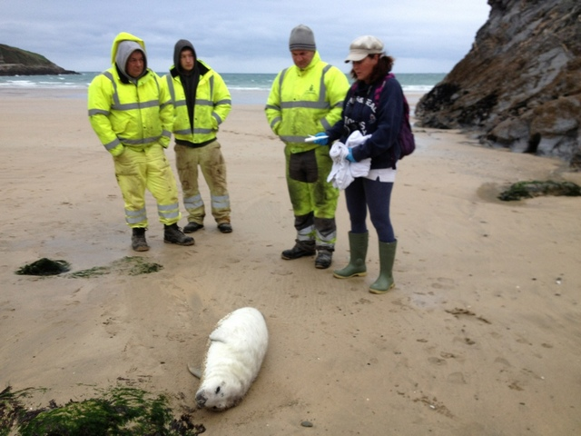 Annabelle and Chris Rescue Exhausted Sick Seal Pup