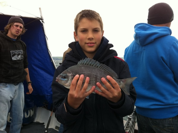 Beautiful Black Bream with blue tinges