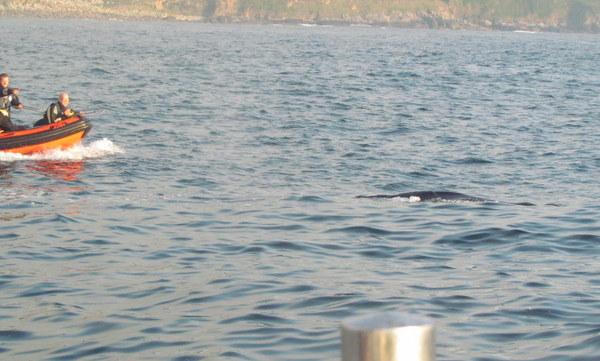 brave marine mammal medics aboard Josh move in one last time