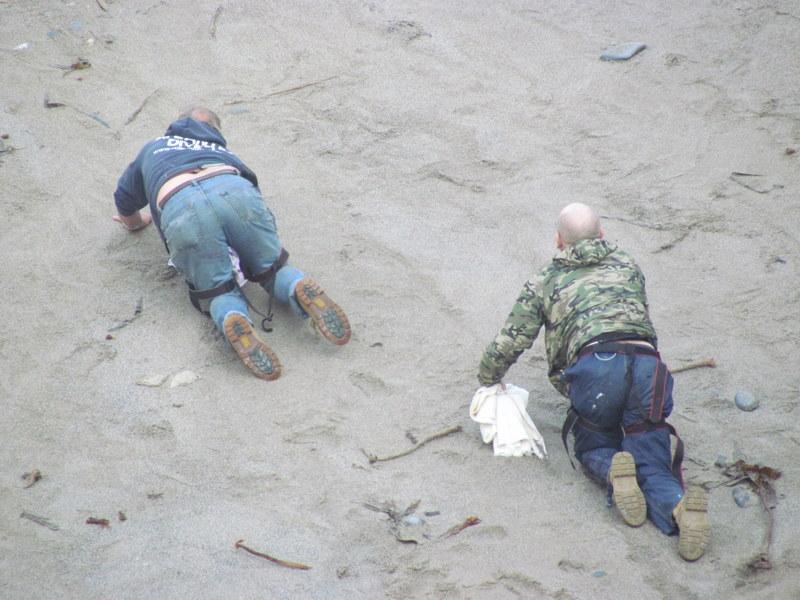 medics trying not to disturb seals