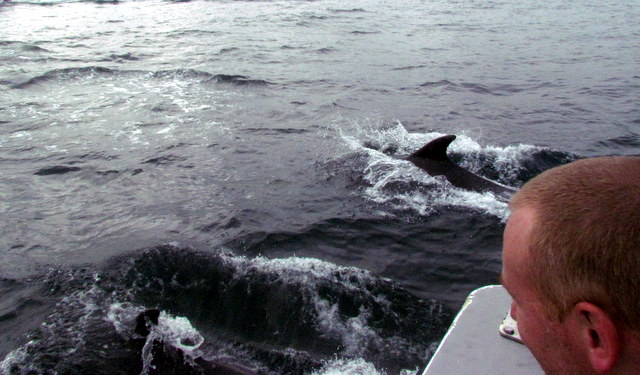 """Sharks Diver watching Bottlenose Dolphins from onboard """"Atlantic Diver"""""""