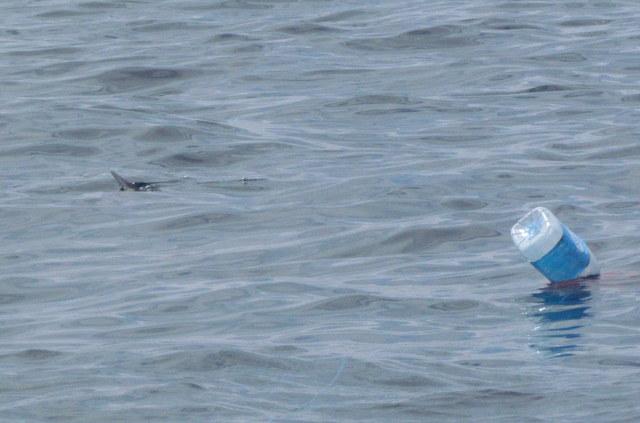 """Sunfish investigates """"Rubbie Dubbie"""" bag close to Atlantic Diver"""