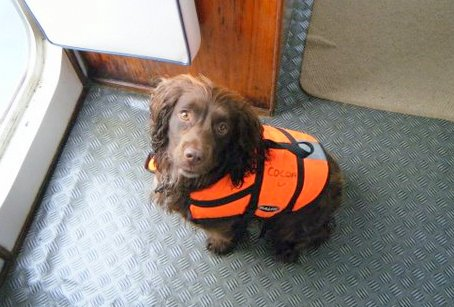 cocoa-dog-on-atlantic-diver