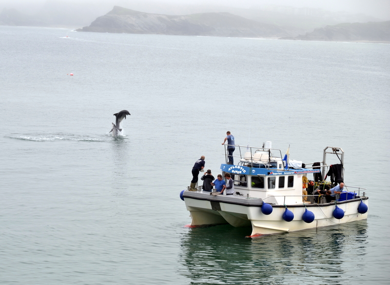 "Iconic Celtic Bottlenose Dolphins being enjoyed from on board ""Atlantic Diver"" in Newquay Bay"