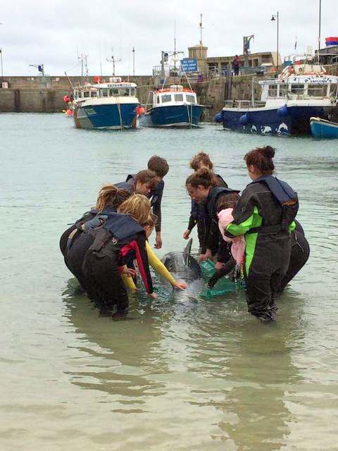 Common Dolphin Rescue Training with Newquay Marine College, Falmouth Marine College and BDMLR